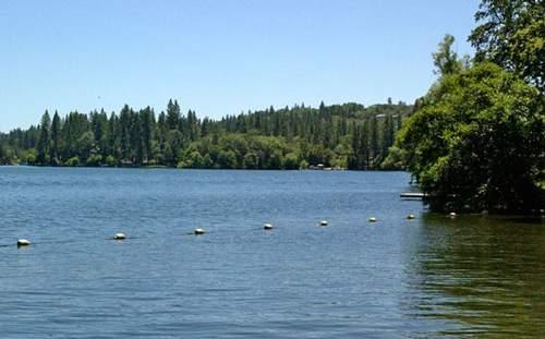 Lake-wild-wood